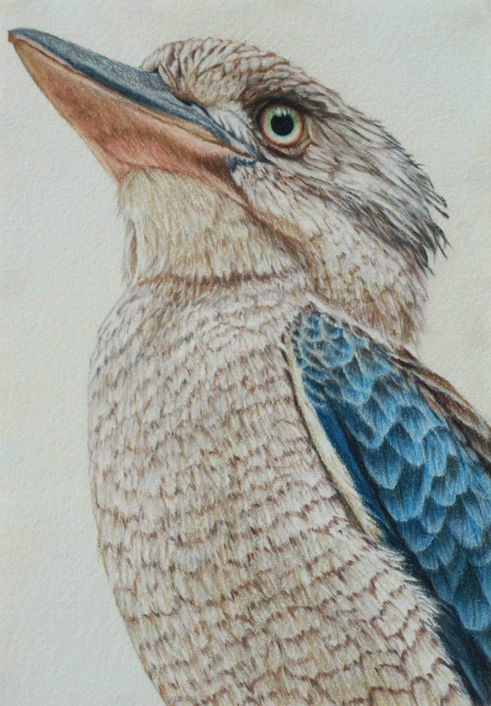 Blue winged kookaburra II 30 x 21 cm  Pastel on handmade paper  sold