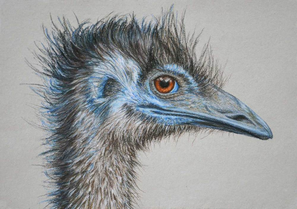 Emu    21 x 30 cm  Pastel on handmade paper   Sold