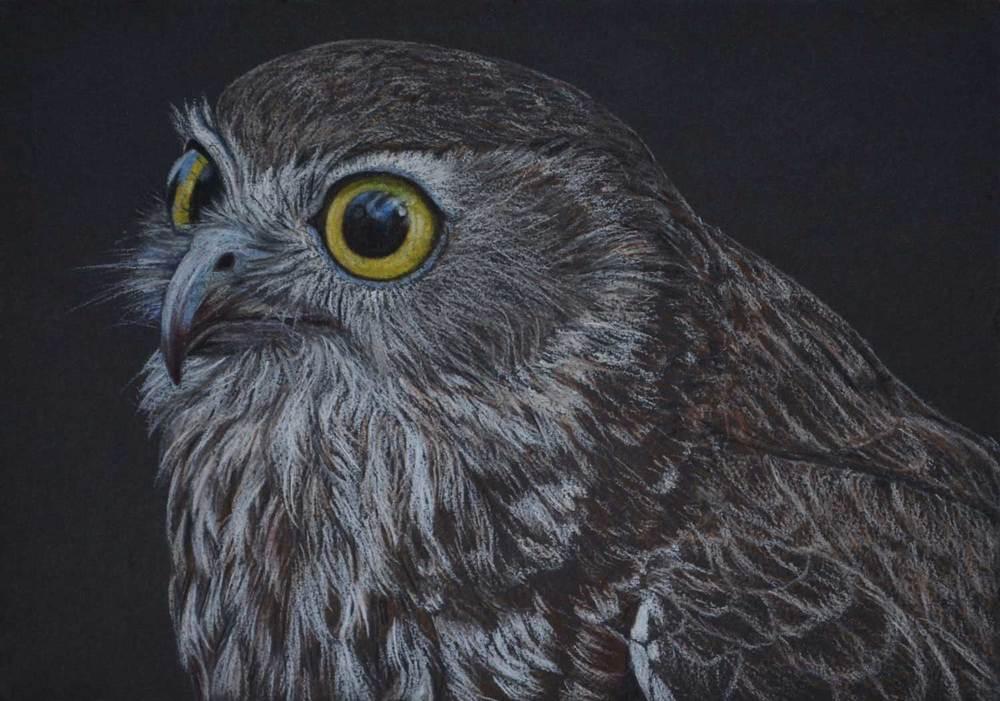 Boobook Owl III  21 x 30 cm Pastel on handmade paper SOLD