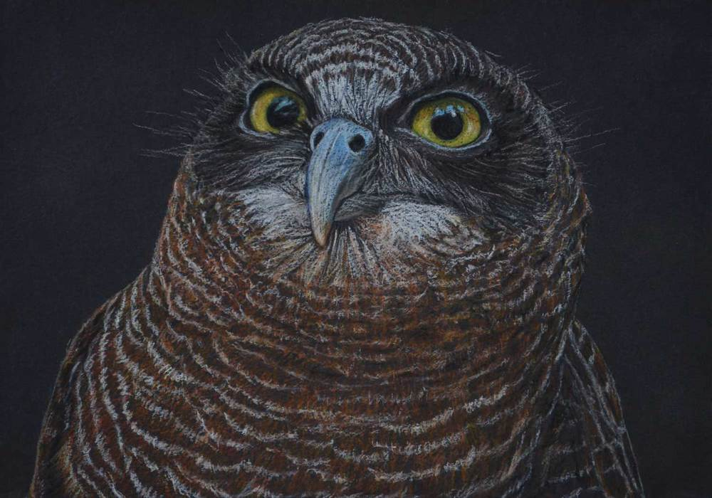 Rufous Owl    21 x 30 cm Pastel on handmade paper SOLD