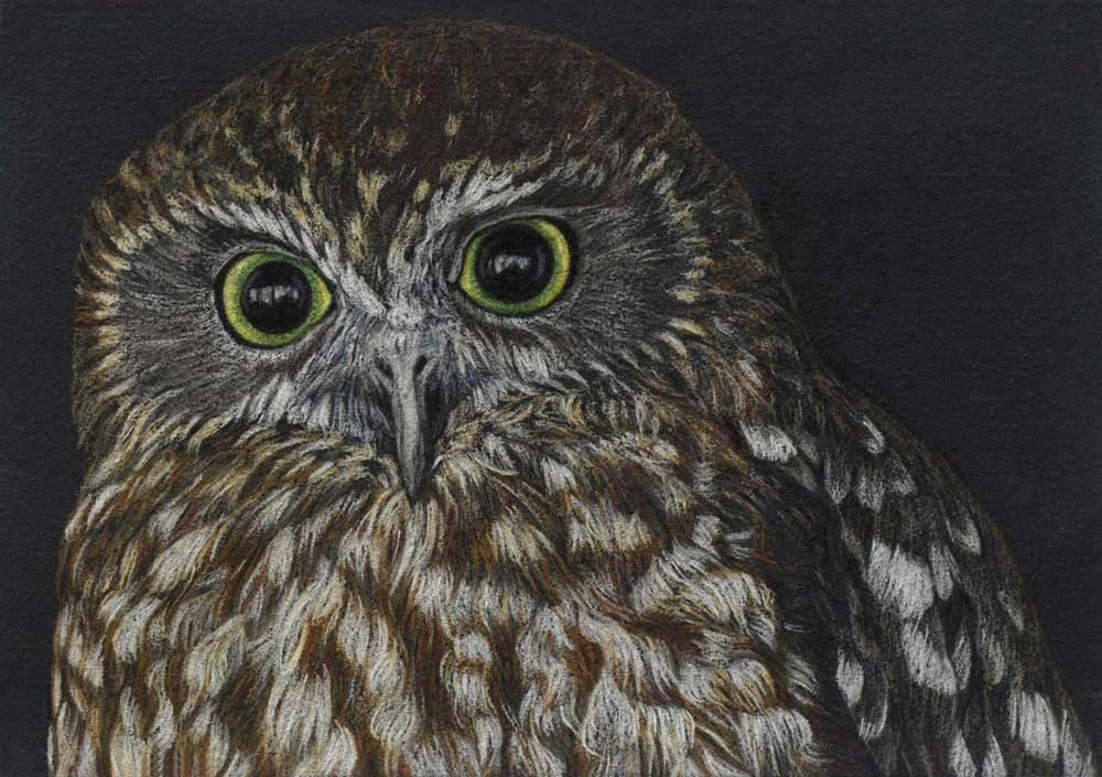 Boobook Owl II   21 x 30 cm                         PASTEL ON HANDMADE PAPER                                Sold