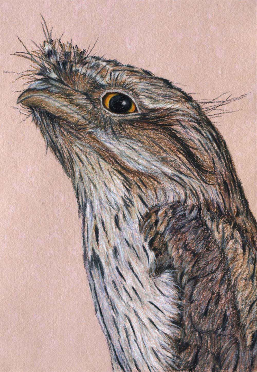 Tawny Frogmouth    30 x 21 cm  Pastel on handmade paper  SOLD
