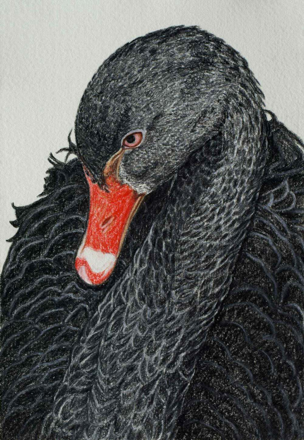 Black Swan  30 x 21 cm Pastel on handmade paper SOLD
