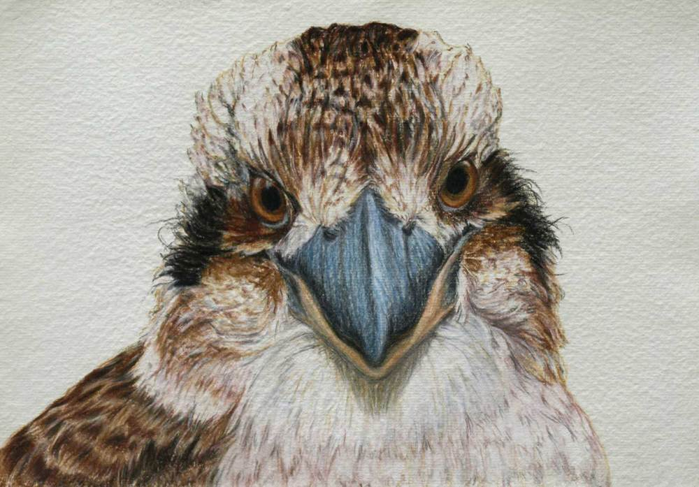 Kookaburra II  21 x 30 cm Pastel on handmade paper SOLD