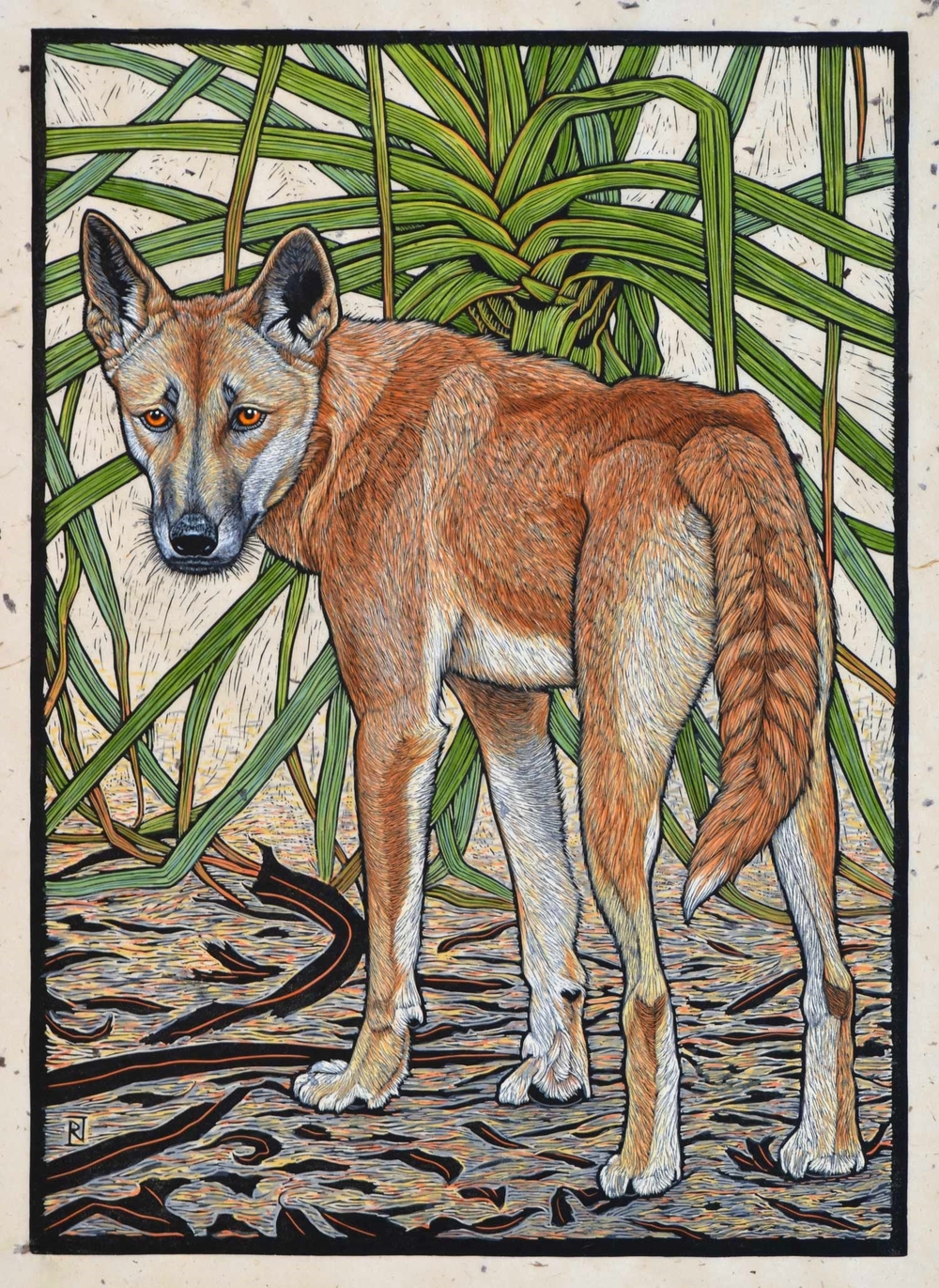 Dingo, Northern Territory  71 x 51 cm    Edition of 50  Hand coloured linocut on handmade Japanese paper  $1,700