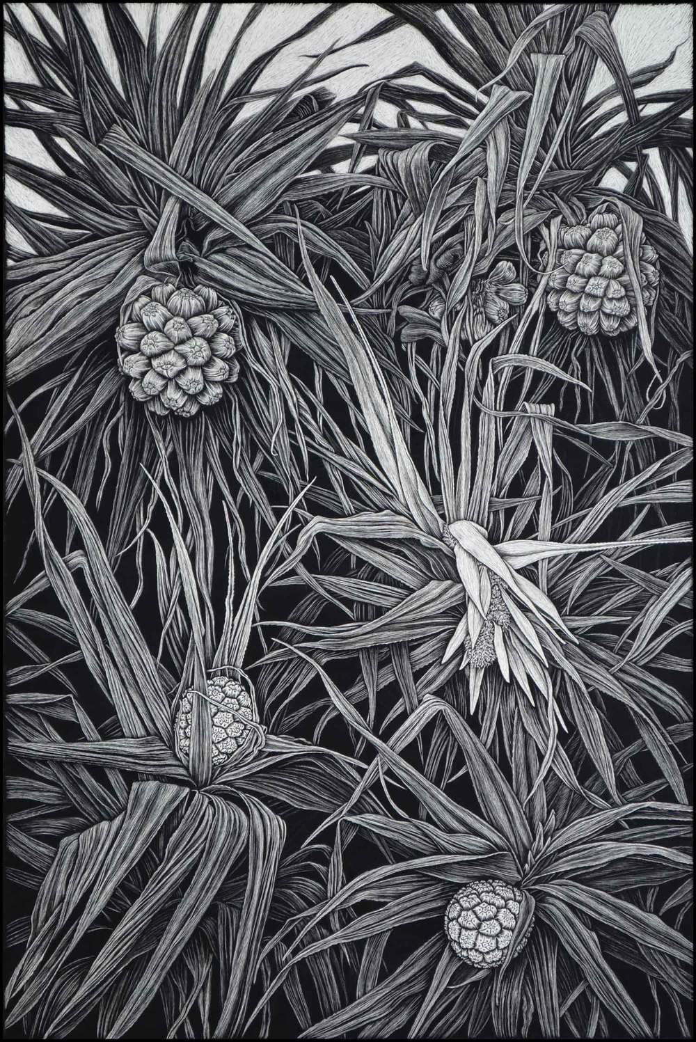 Pandanus in Flower  91.5 x 61 cm    Edition of 50  PIGMENT ON COTTON RAG PAPER  $1,550