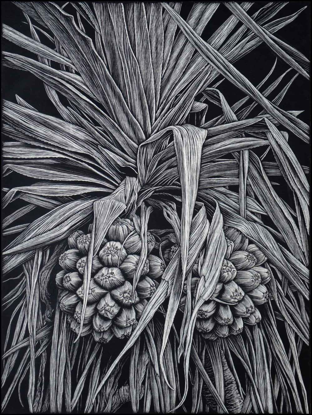 Pandanus Palm Beach  61 x 45.5 cm    Edition of 50  PIGMENT ON COTTON RAG PAPER  $1,100