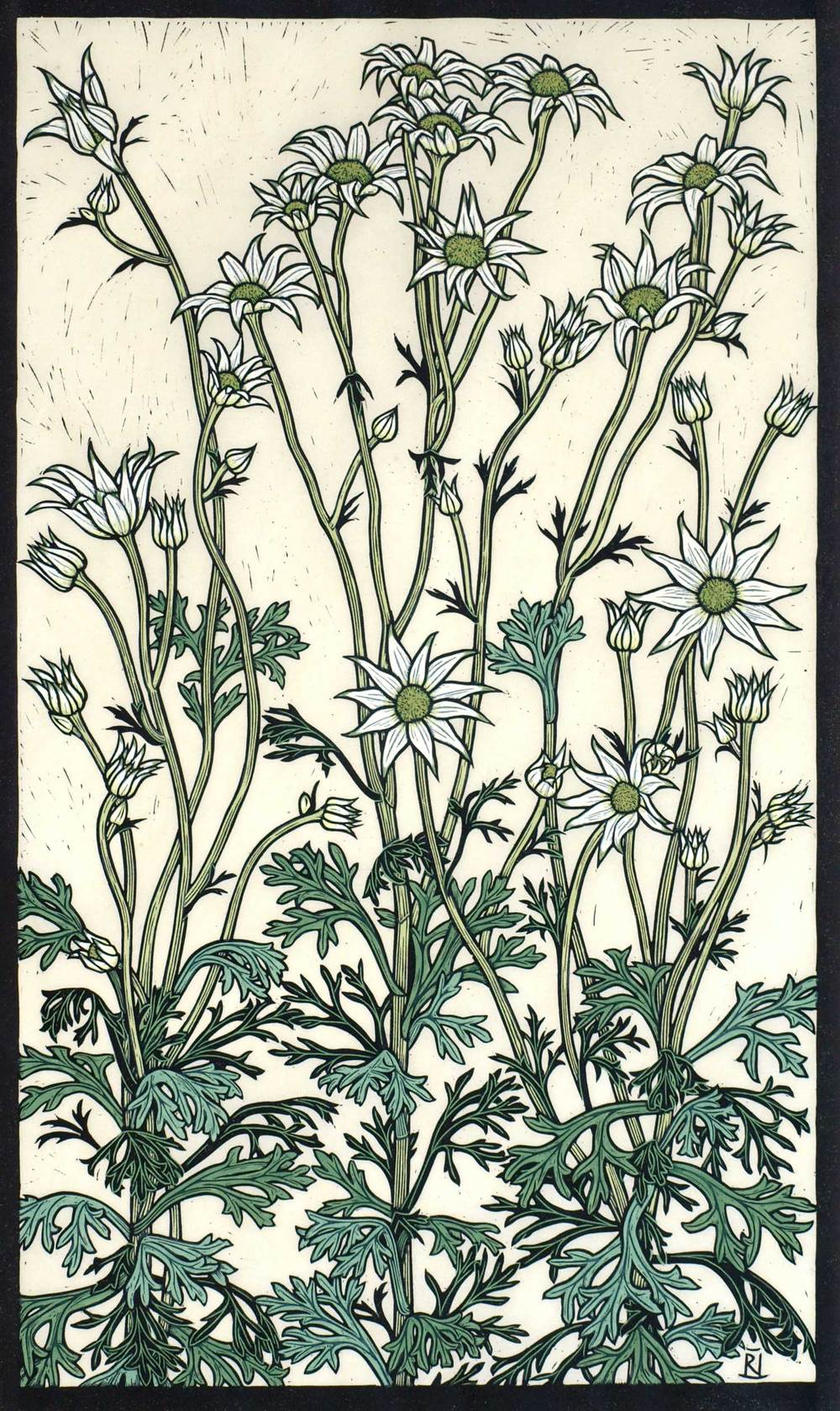 FLANNEL FLOWER 67 X 40 CM    EDITION OF 50 HAND COLOURED LINOCUT ON HANDMADE JAPANESE PAPER $1,250