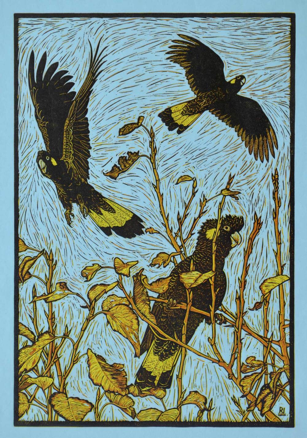 THREE YELLOW-TAILED BLACK COCKATOOS (reduction version) 53.5 X 36.5 CM    EDITION OF 7 REDUCTION LINOCUT ON HANDMADE JAPANESE PAPER $1,000