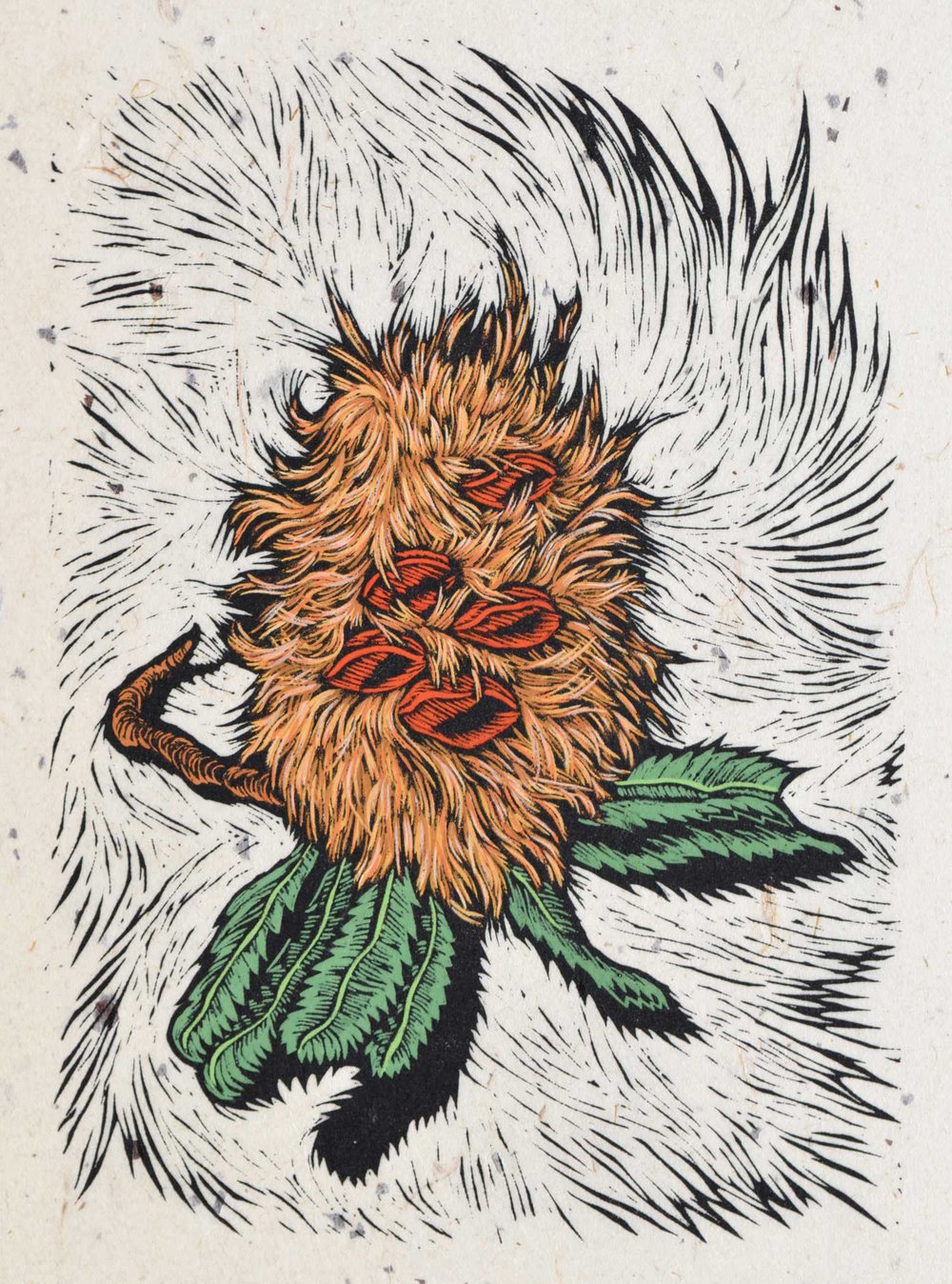 Banksia Man  41 x 29 cm    Edition of 50   Hand Coloured Linocut on handmade Japanese paper  $850