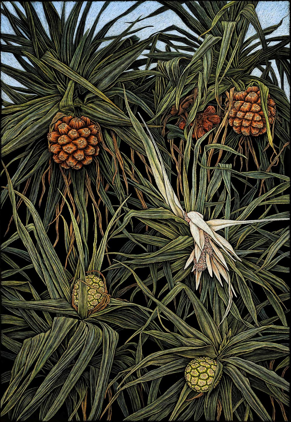 PANDANUS IN FLOWER (colour version) 91.5 X 61 CM    EDITION OF 50 PIGMENT ON COTTON RAG PAPER $1,550