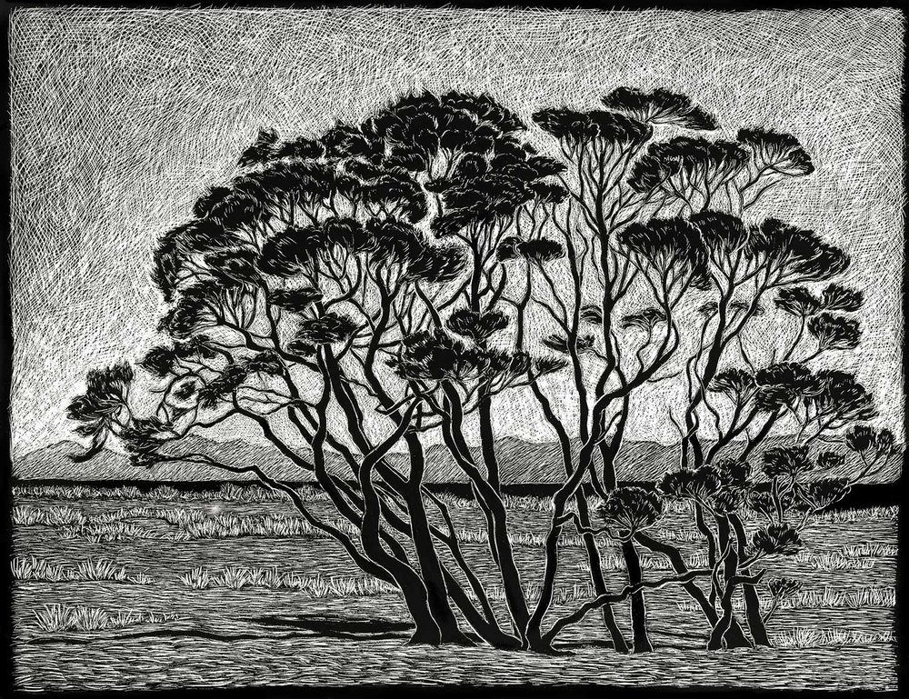 Manuka Trees  35 x 45 cm     Edition of 50  pigment on cotton rag paper  $750