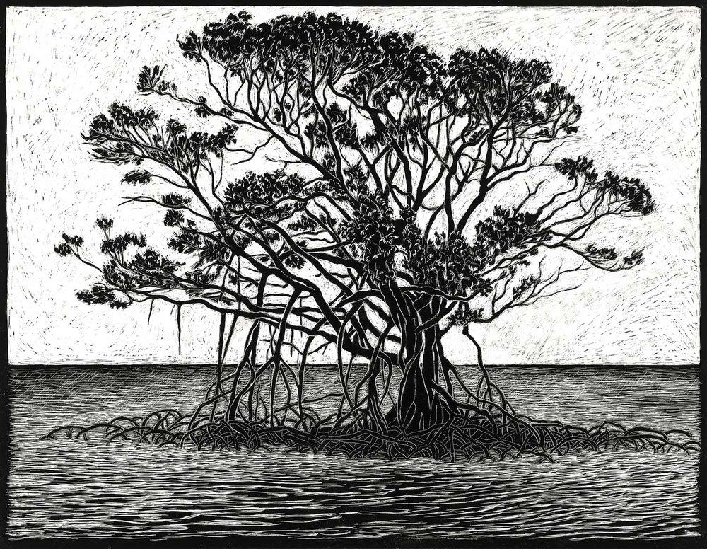 mangrove-engraving-rachel-newling.jpg