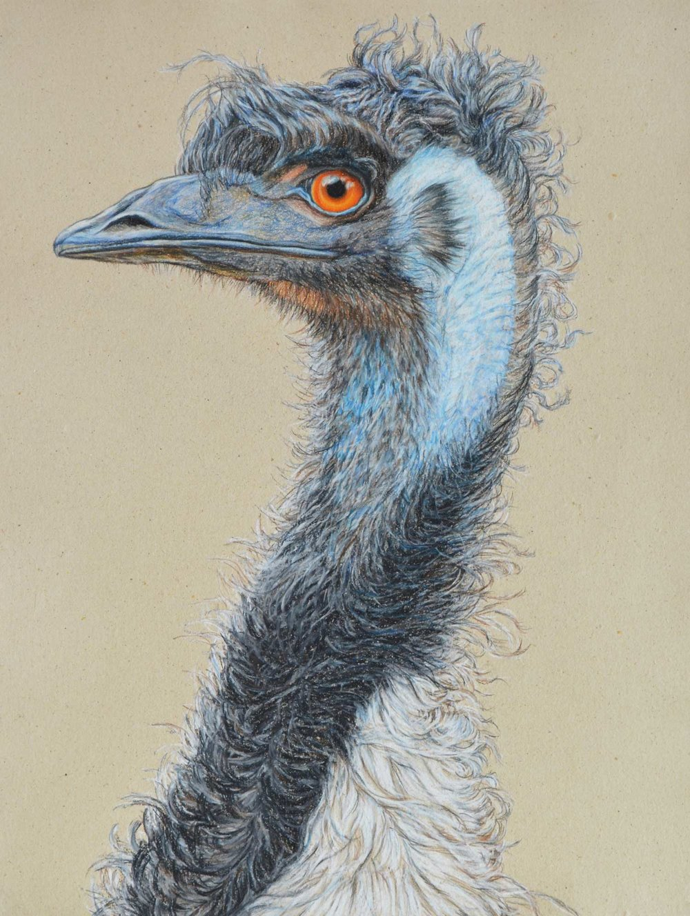 Emu Portrait  64.5 x 50 cm, pASTEL ON HANDMADE PAPER  Available as a limited edition print  $1,100
