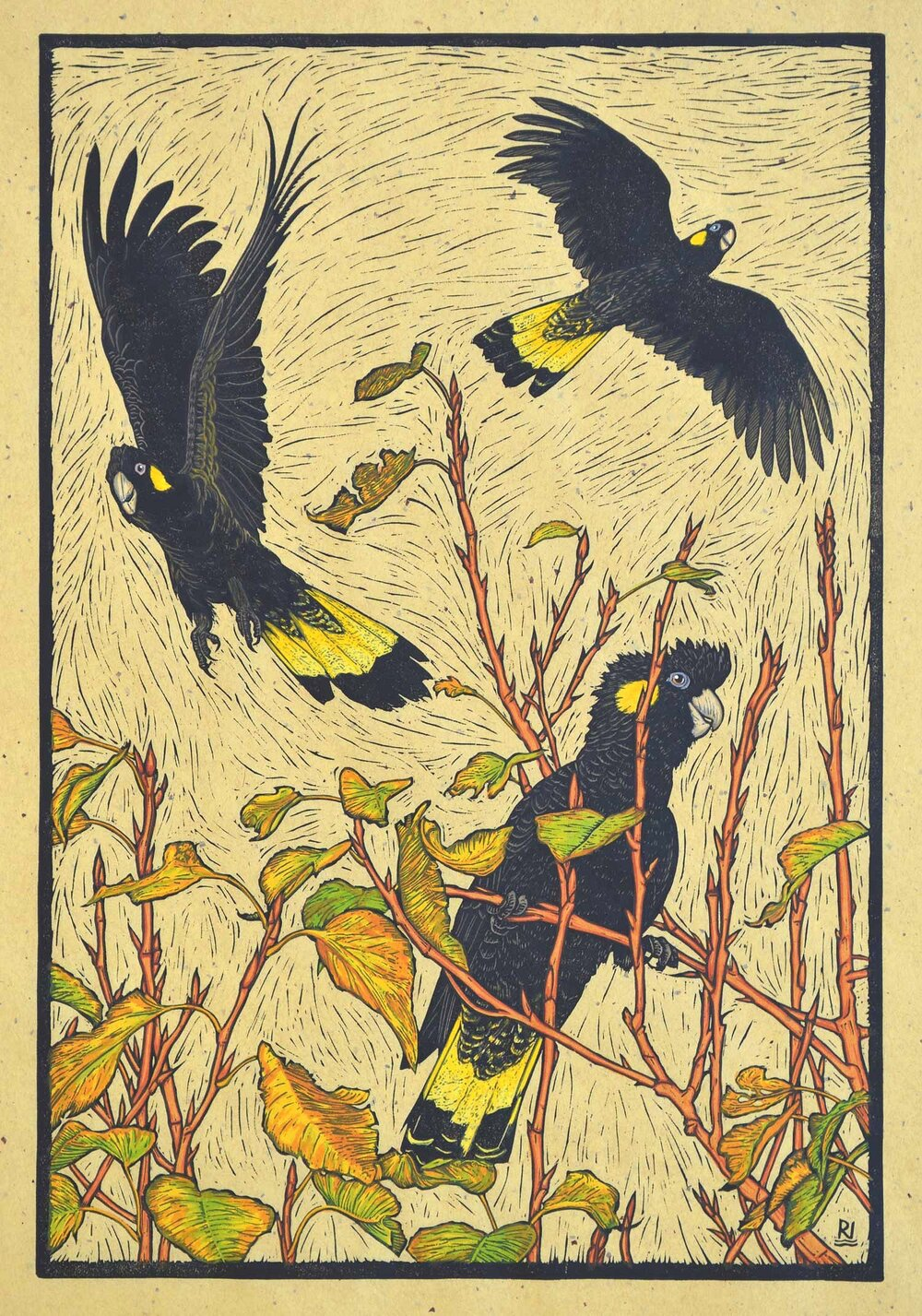 three-yellow-tailed-black-cockatoos-linocut-rachel-newling.jpg