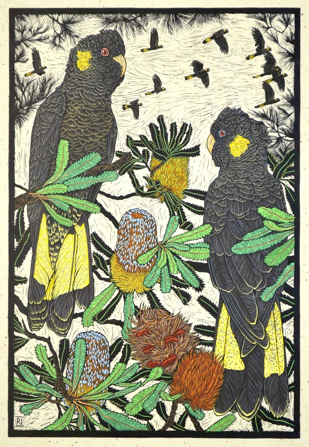 yellow-tailed-black-cockatoo-and-banksia-linocut-rachel-newling.jpg