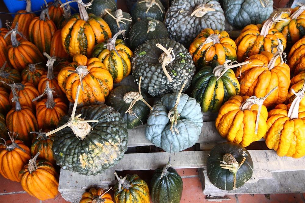 Mum's pumpkin crop.jpg