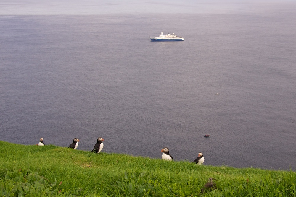 The prized puffins of Mykines, Faroe Islands
