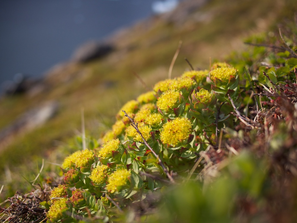Lush vegetation in Prince Christiansund, Greenland