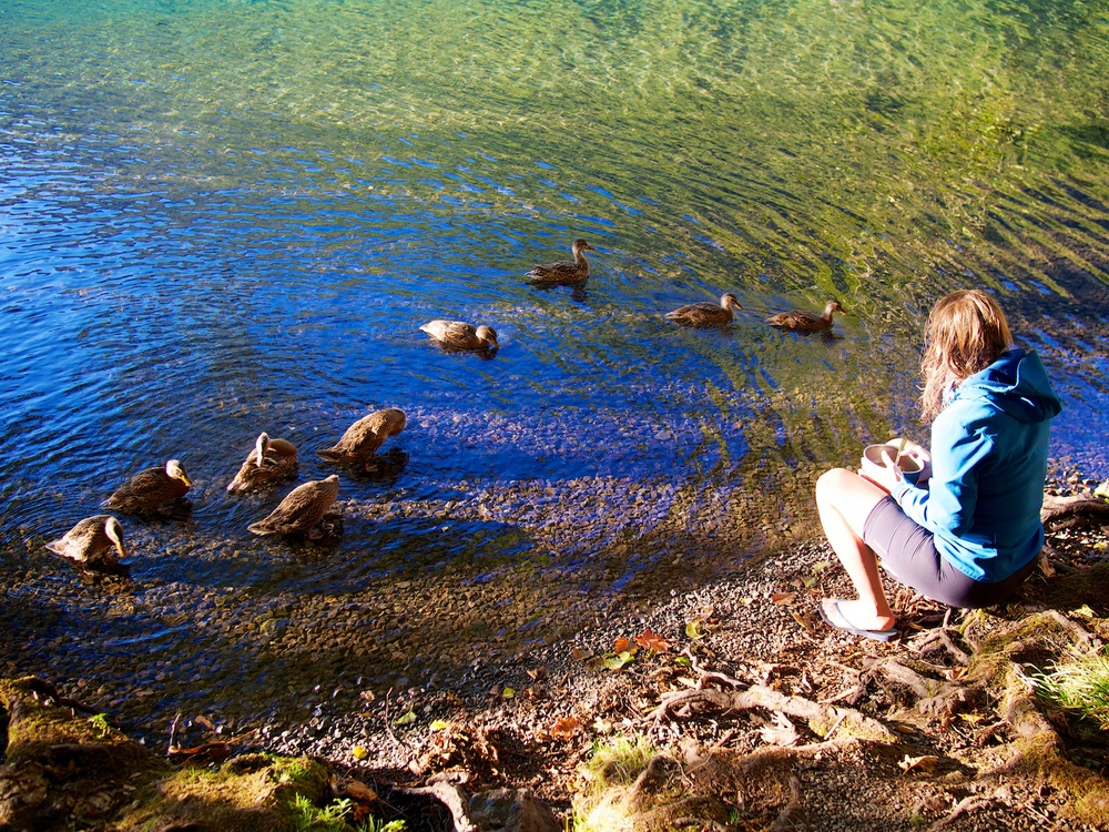 Watching the ducks happily enjoying the beautiful waters.