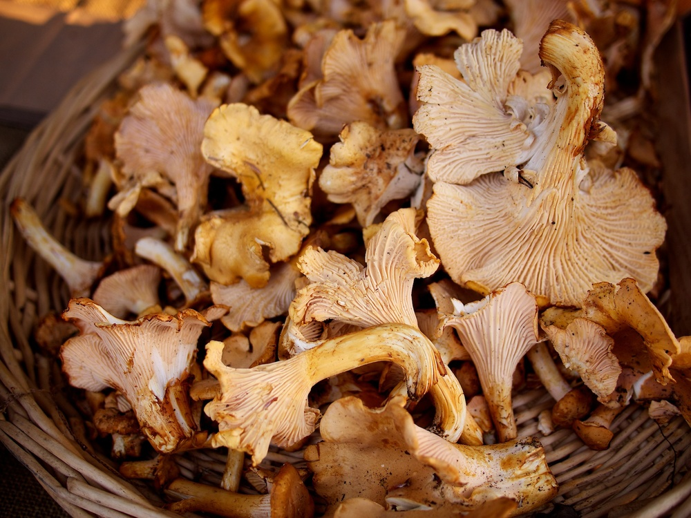 Fresh mushrooms, yum!