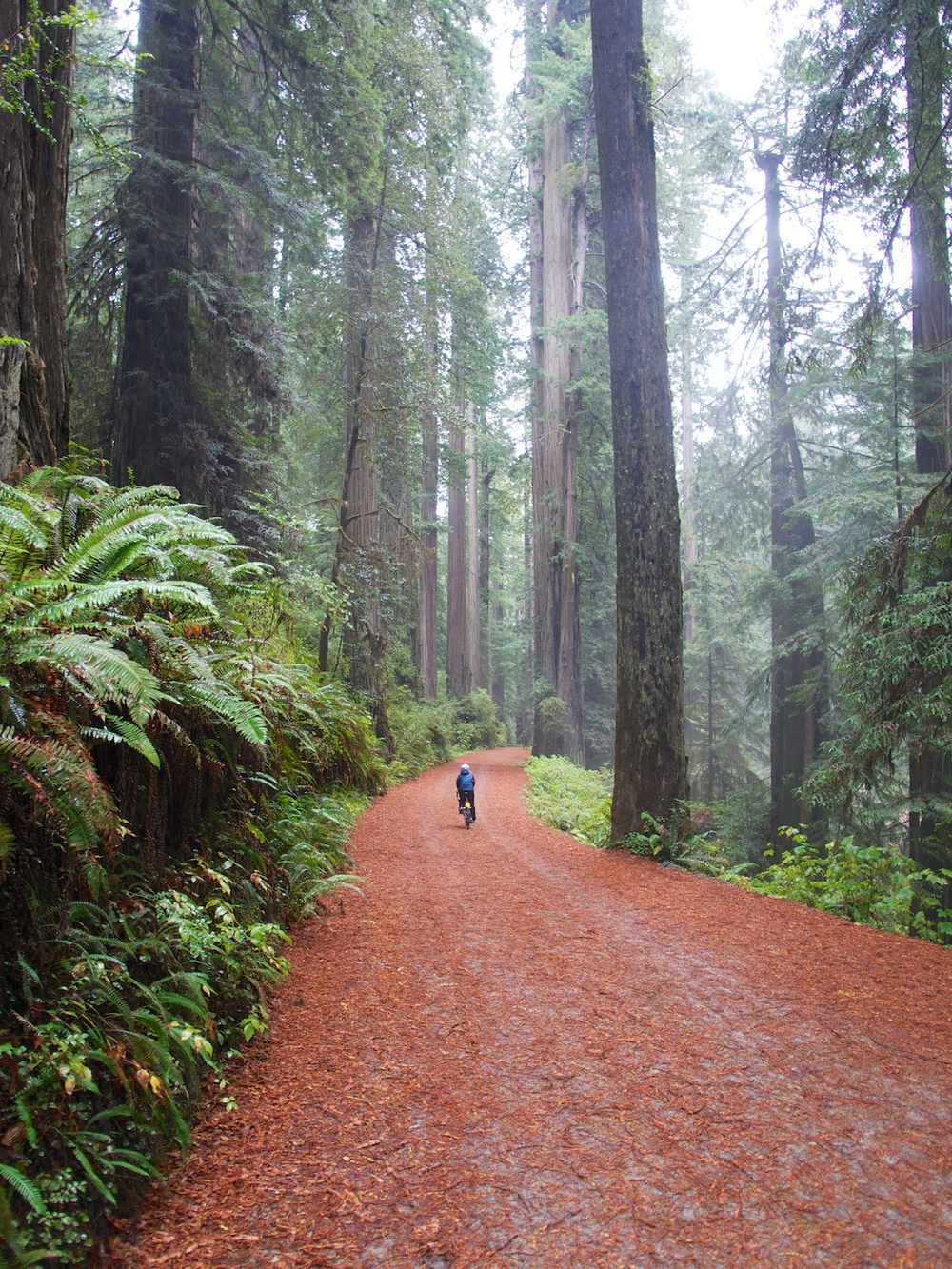 Biking bliss through the amazing redwood forests.