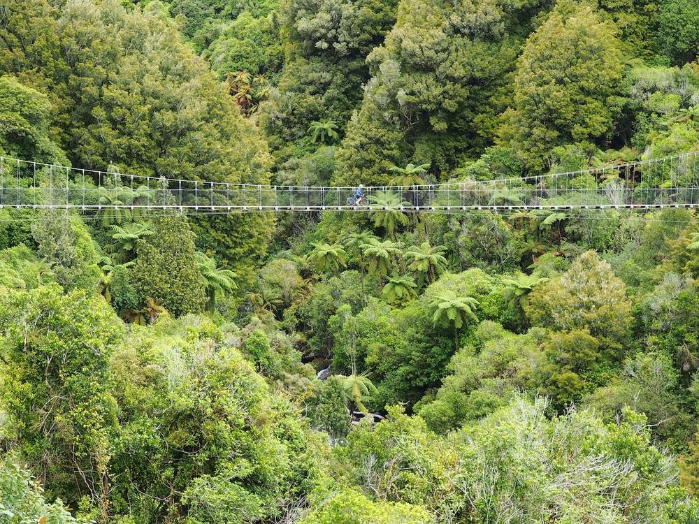 The Timber Trail near Taumaranui