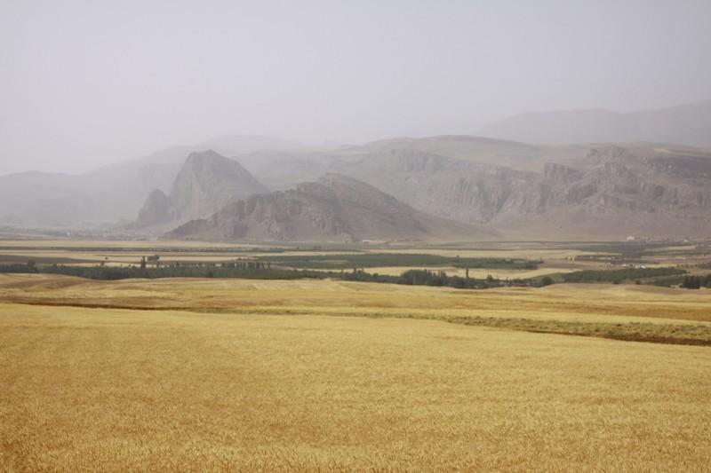 Dry fields.