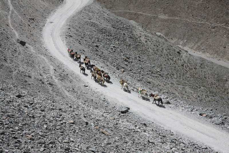 A caravan of animals near Chandra Tal lake.