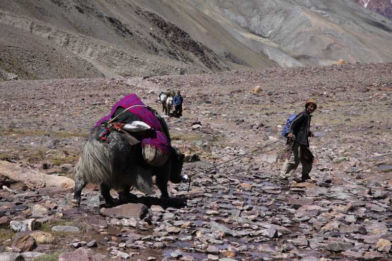 An old women bringing her yak down the valley for the winter.