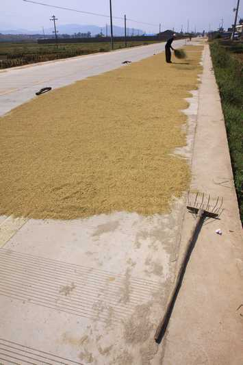 Drying rice on the road out of Xichang.