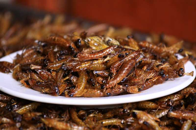 Deep fried worms.