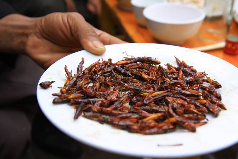 ...and a pre-lunch snack, fried crickets!