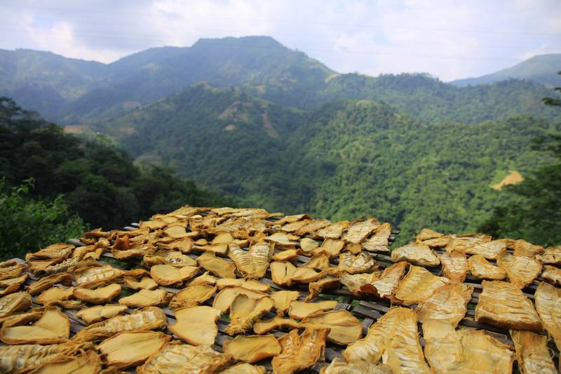 Bamboo shoots drying (and stinking) in the sun.