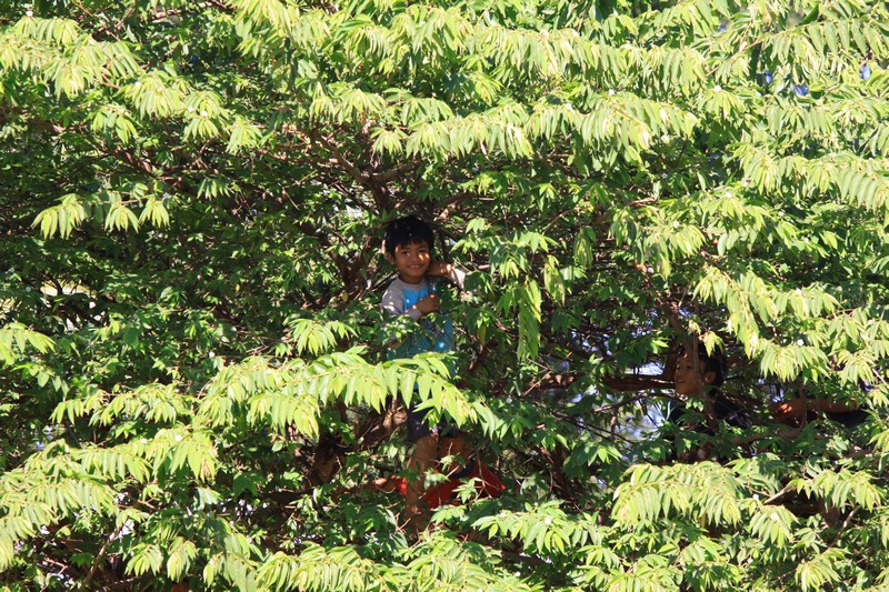 Kids watching us eat lunch from the safety of a nearby tree,