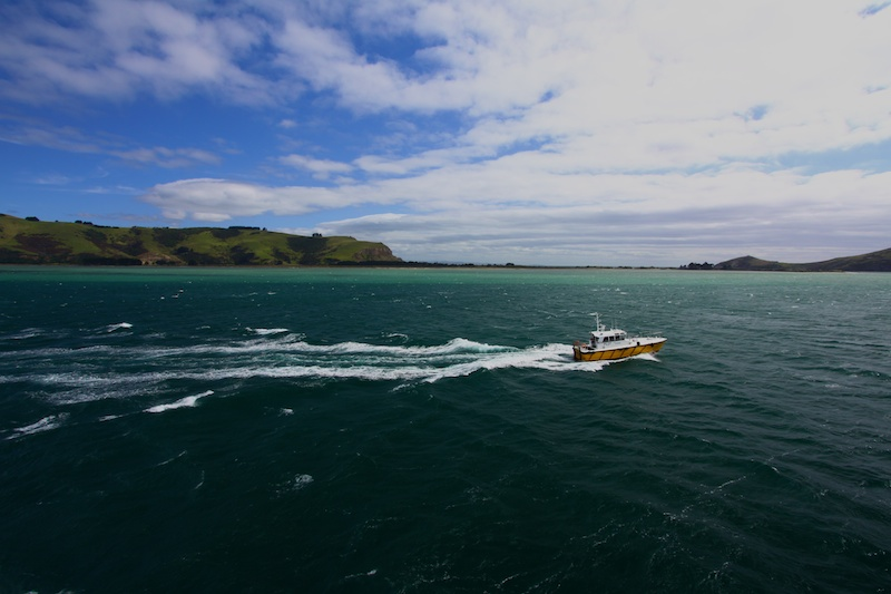 The pilot boat escorting us out of Port Chalmers
