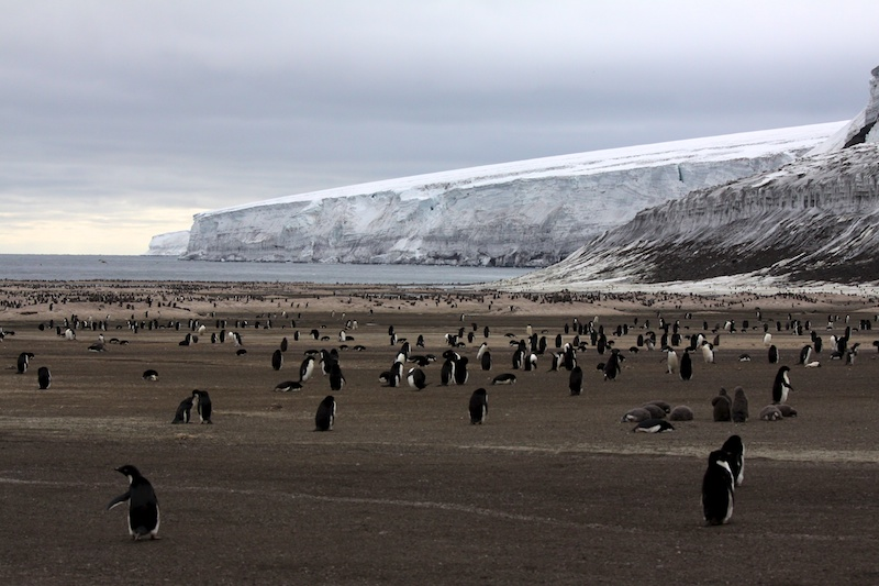 Another Adelie penguin colony at Franklin Island.