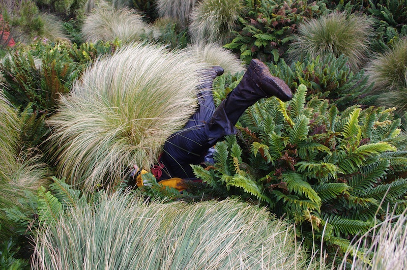 Falling off a tuft of tussock into the bracken below.