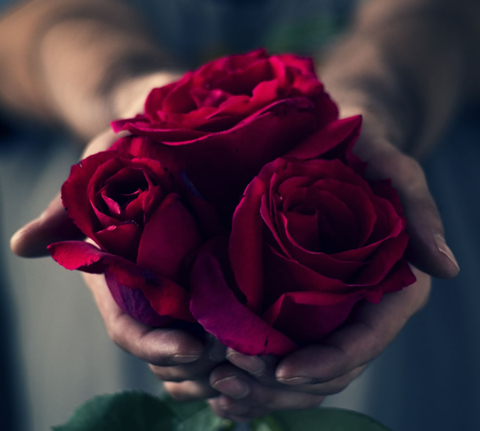 One-single-red-rose-shows-love-a-dozen-red-roses-show-gratitude.-25-red-roses-mean-congratulations-and-a-bouquet-of-50-red-roses-show-unconditional-love.jpg
