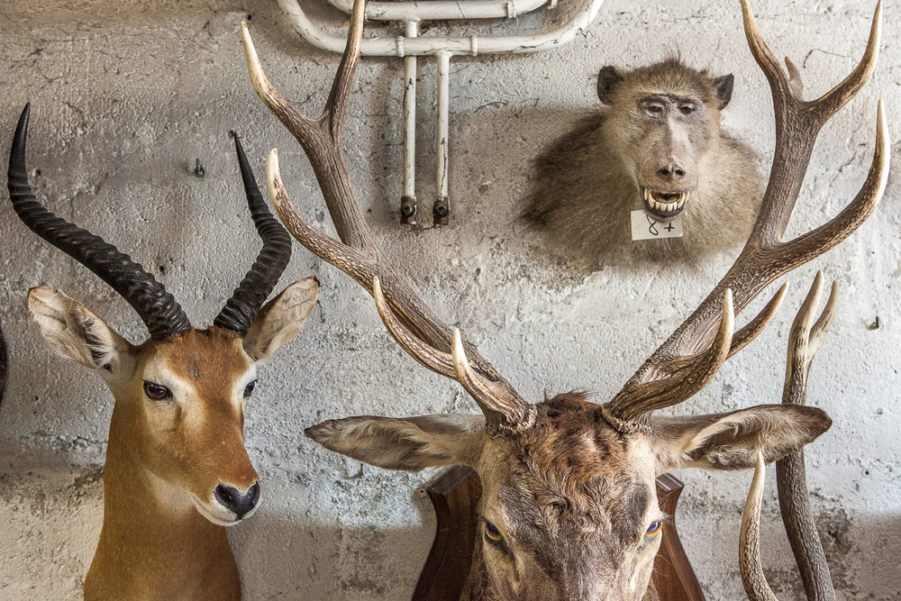 taxidermiste vallier