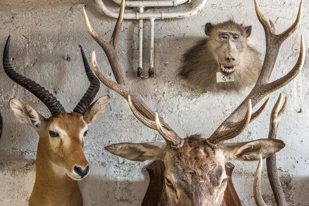 Animaux terminés accrochés sur le mur de l'atelier. 2013. © Sébastien Borda