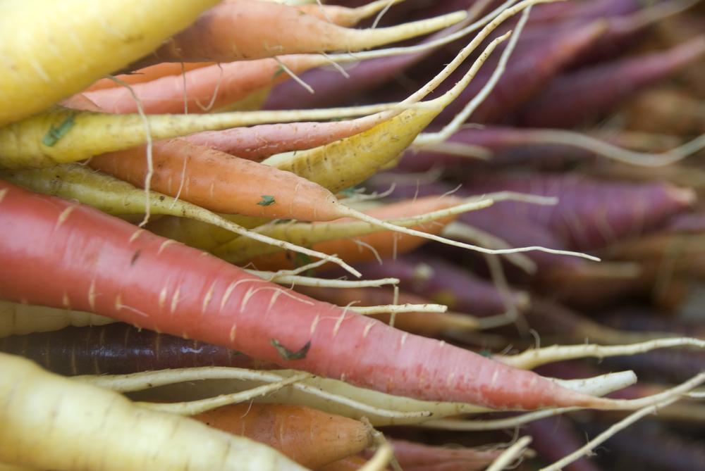 Carrots_6111.jpg