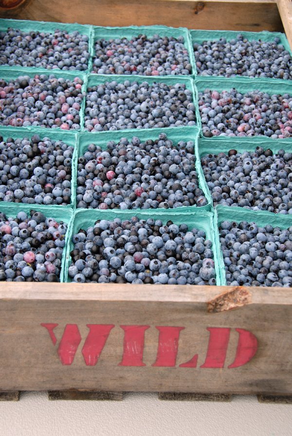 Blueberries_0822.jpg