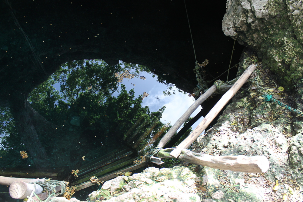 The wooden ladder into the refreshing water below.