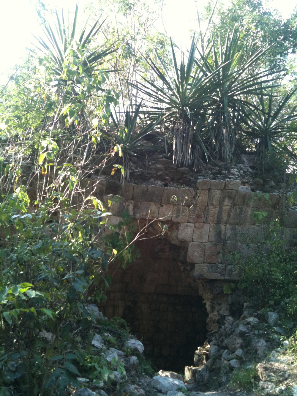"An example of the famous ""Mayan arch"" buried under vegetation, Uxmal, Yucatan"