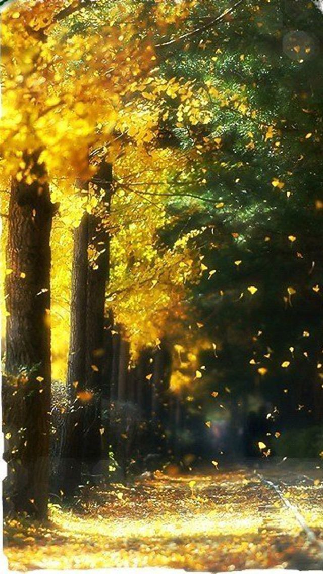 Fall-Trees.jpg