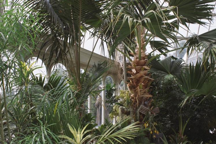 palmhouse5.jpg