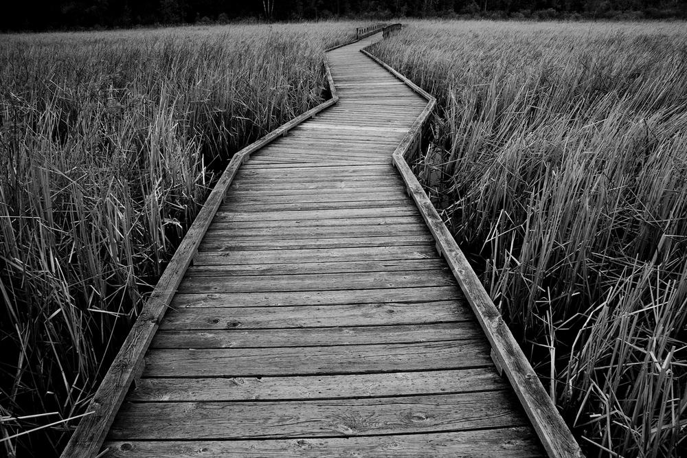 crooked_path_WEB.jpg
