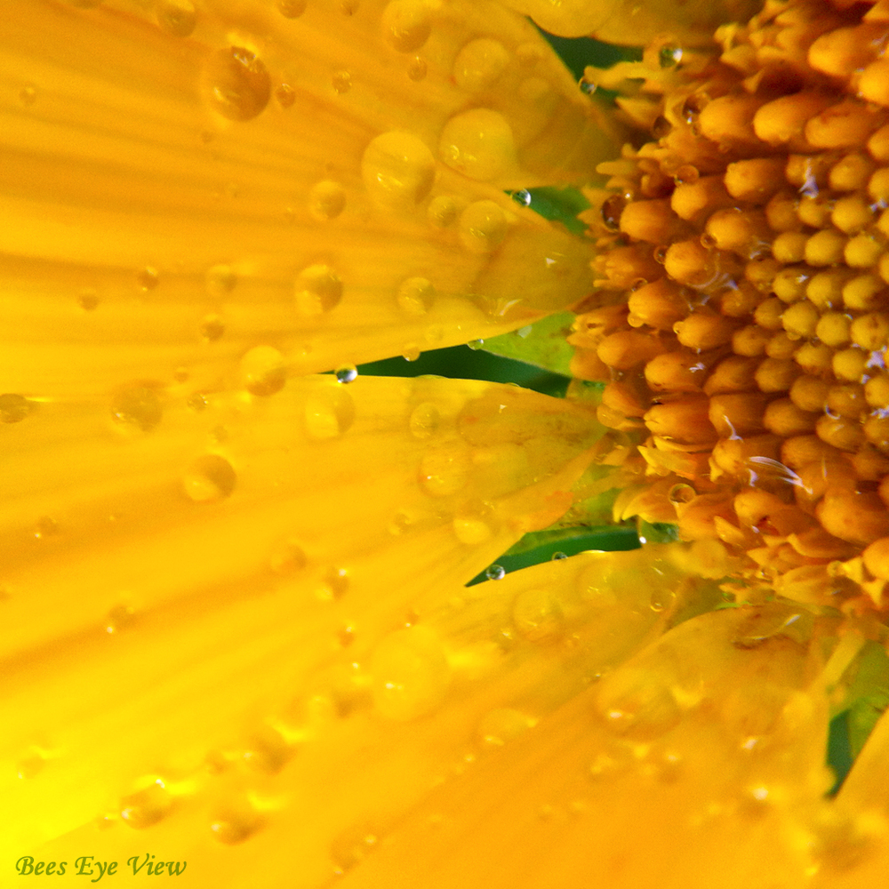 YellowWet.jpg