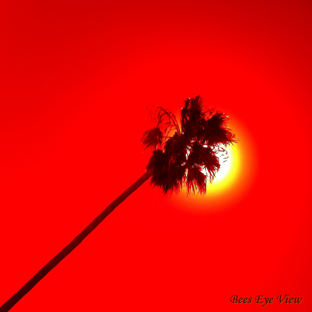 RedPalm.jpg